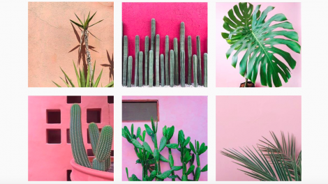 Plants on Instagram
