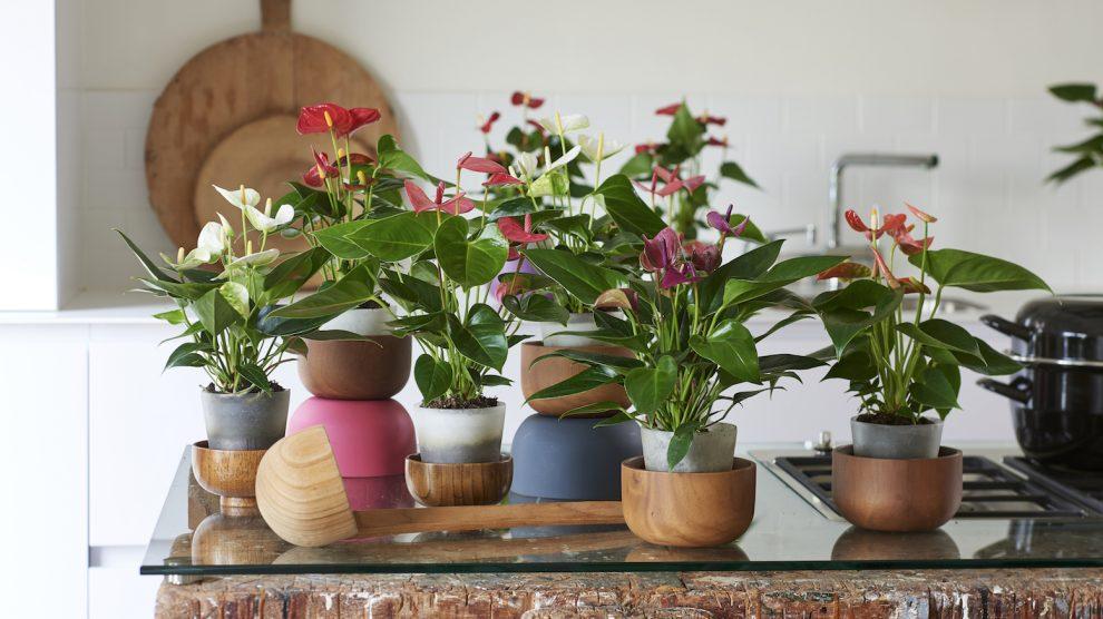 de beste planten voor elke kamer in huis