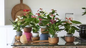 The best plants for every room in your house