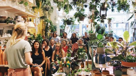 Houseplant care Workshops in UK