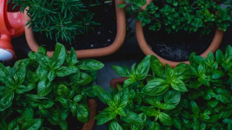 How to care for an herb garden