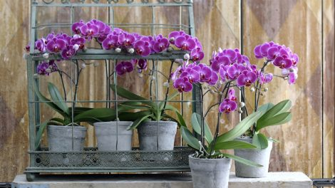 Using orchid potting soil
