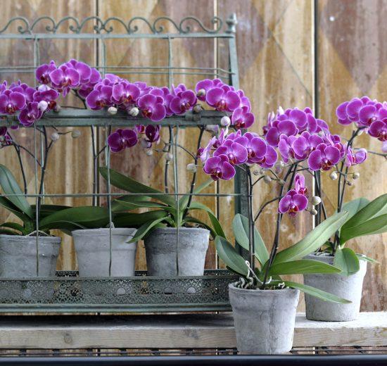Using orchid potting soil