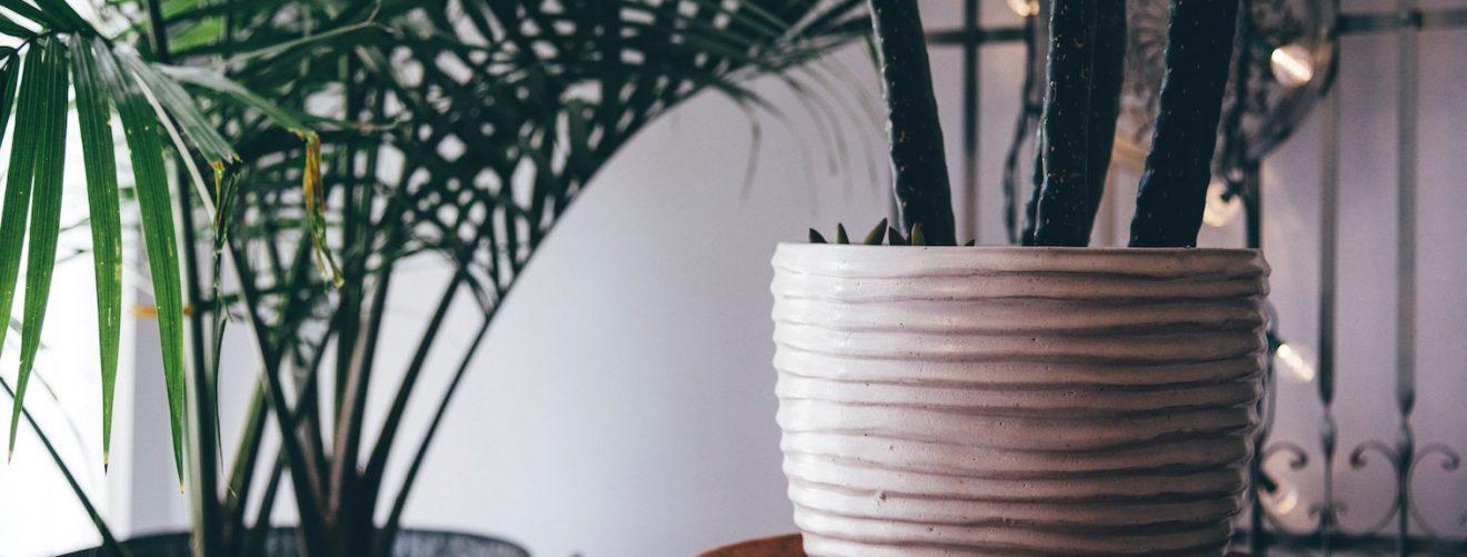 Deze 4 planten verkoelen je huis