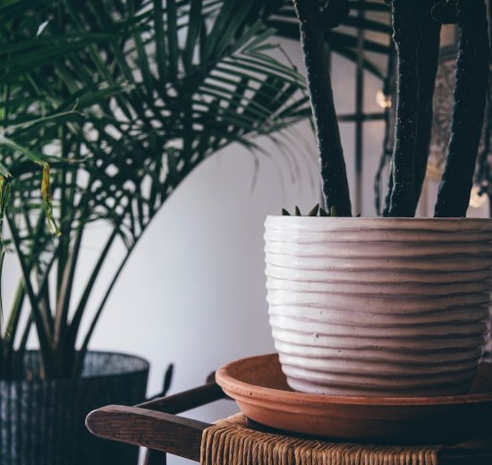 Plants that keep your home cool