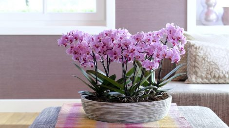 best places to put an orchid