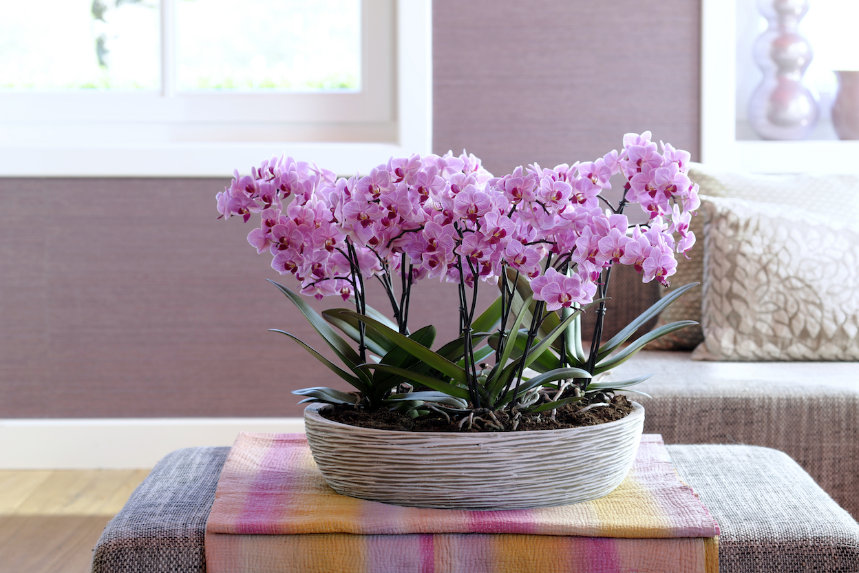 beste standplaats voor je orchidee