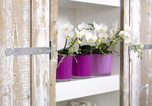 Orchidee verpotten