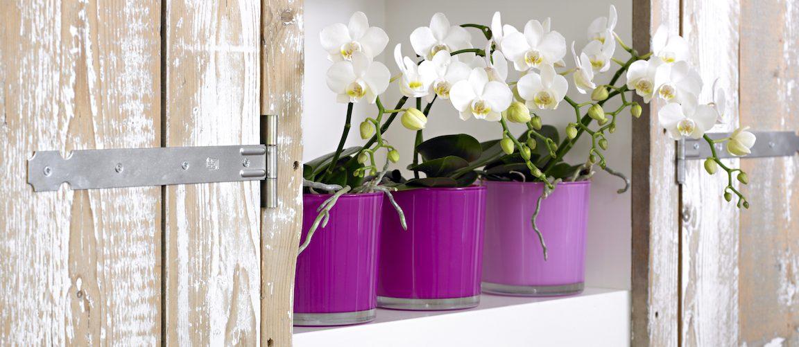 Repot an orchid