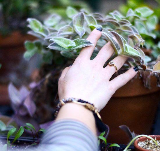 planten te laten groeien