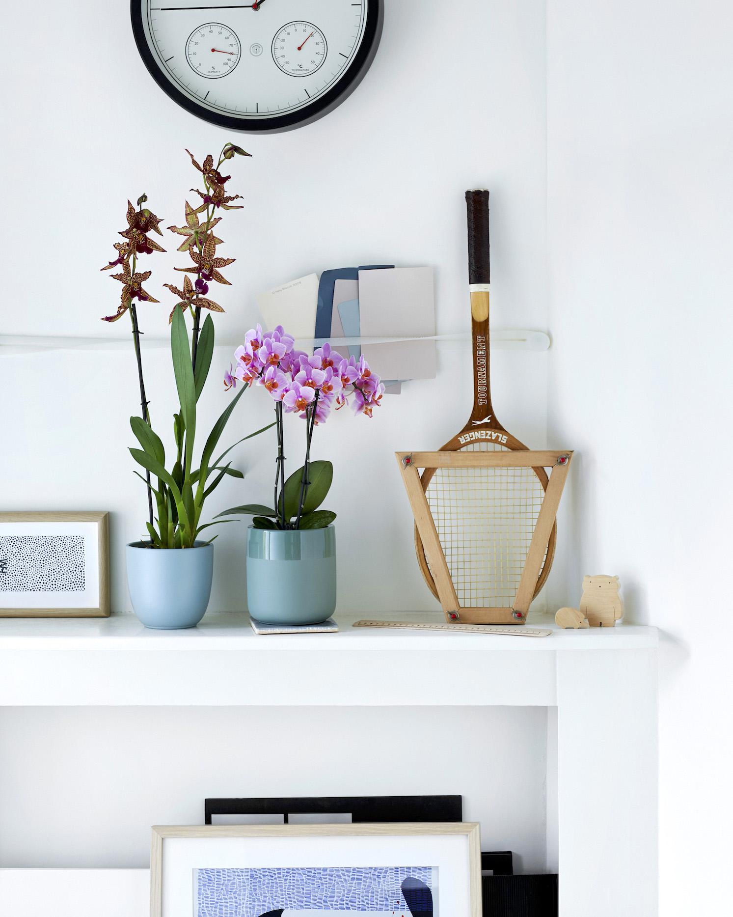 Santa Rosa orchidee