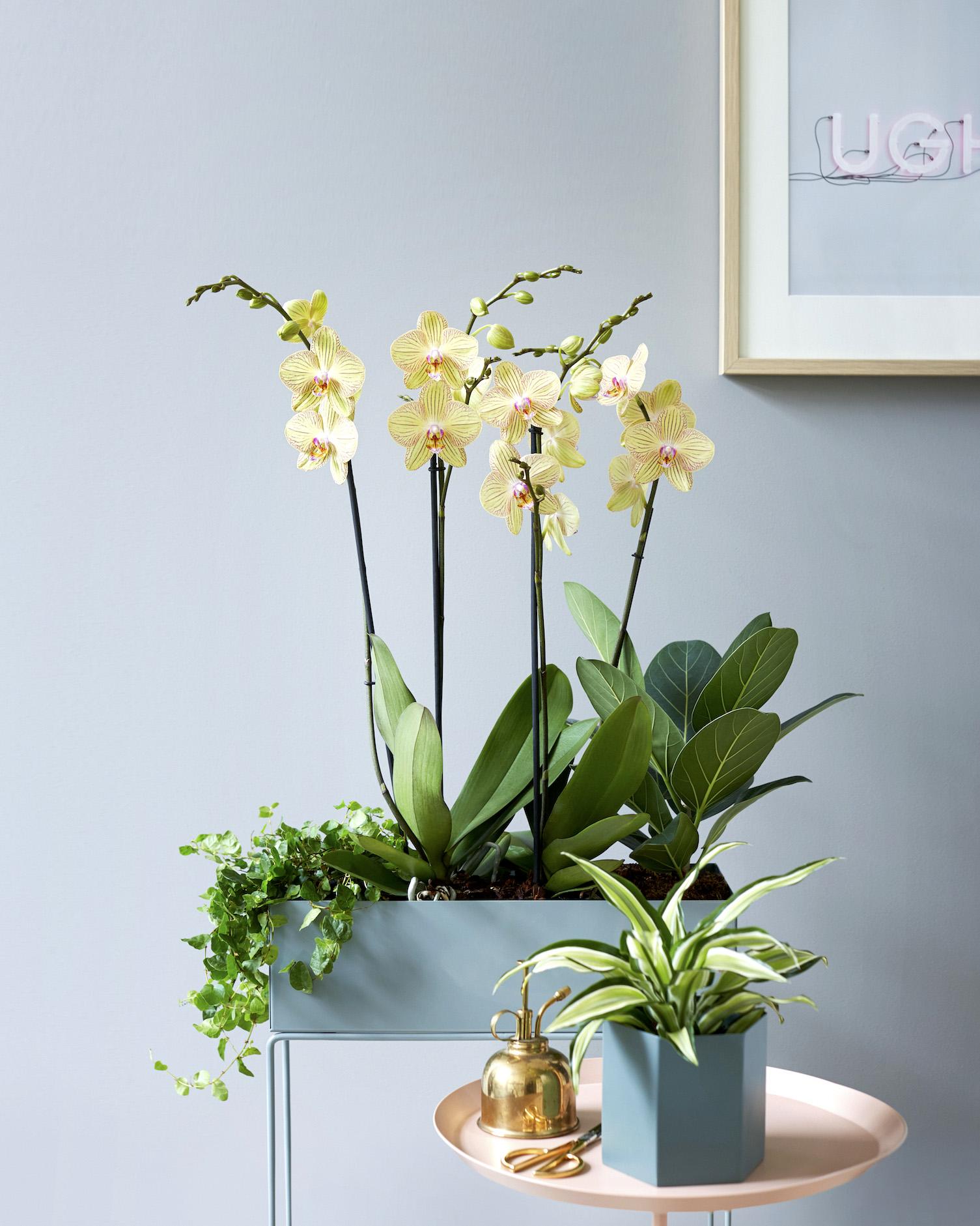 Torino orchidee