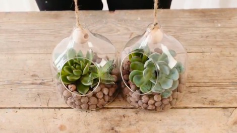 Little glass ornaments with succulents