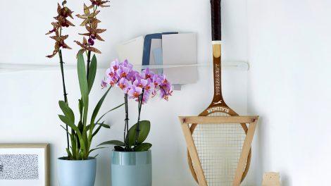 4 nieuwe soorten orchideeën