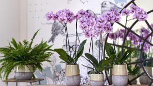 De 4 planten trends van dit najaar