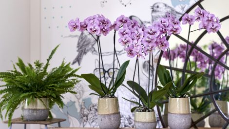 The 4 fall 2018 indoor plant trends