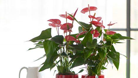 Planten zuiveren de lucht