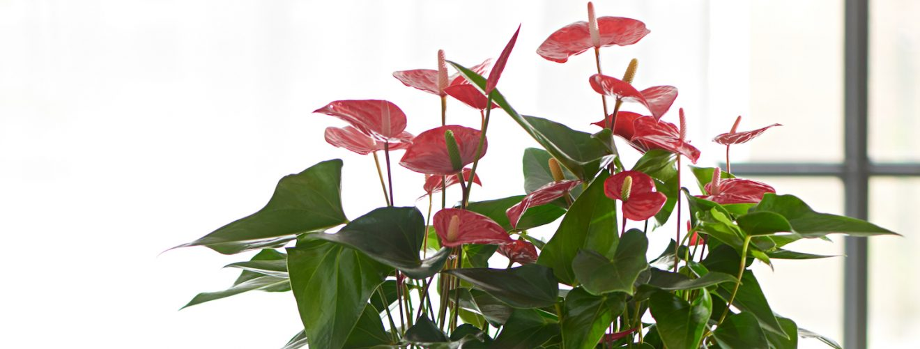 Can plants really purify the air?