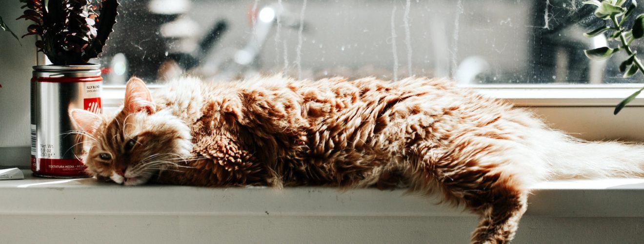 Veilige planten voor huisdieren