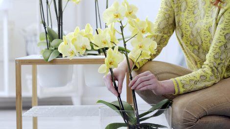 vragen die je moet stellen voordat je een nieuwe plant koopt