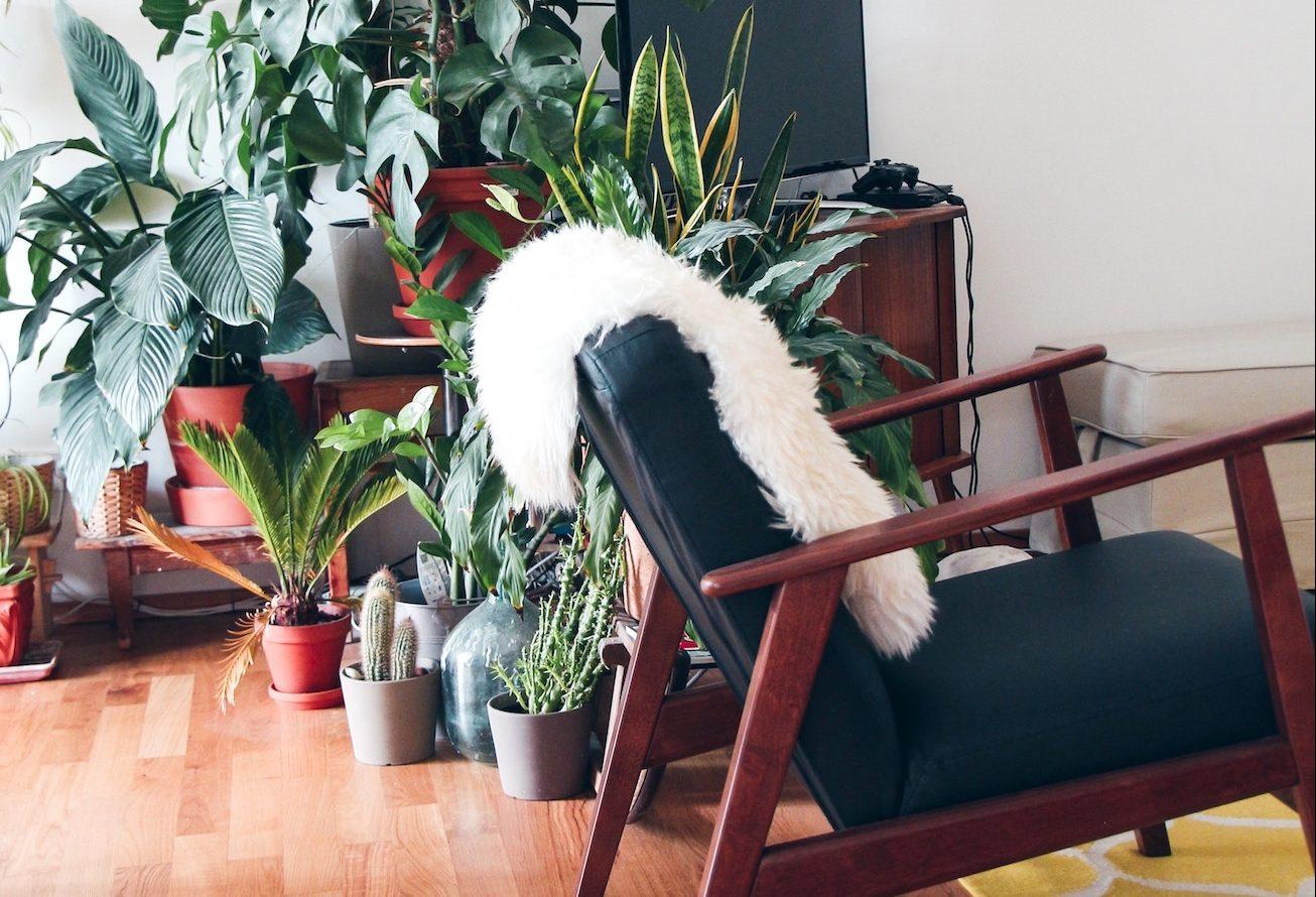 Een energieboost met behulp van planten