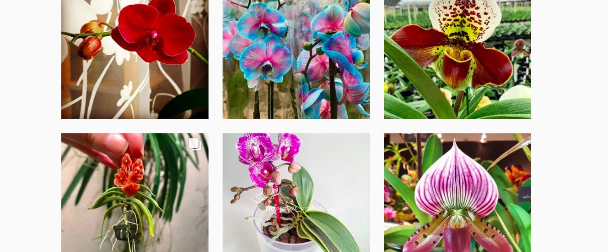 Orchideeën van Instagram