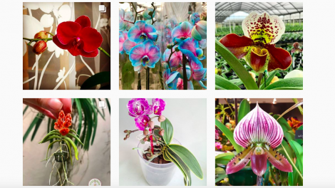 beautiful orchids on Instagram