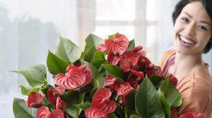 Redenen om vaker bloemen te kopen