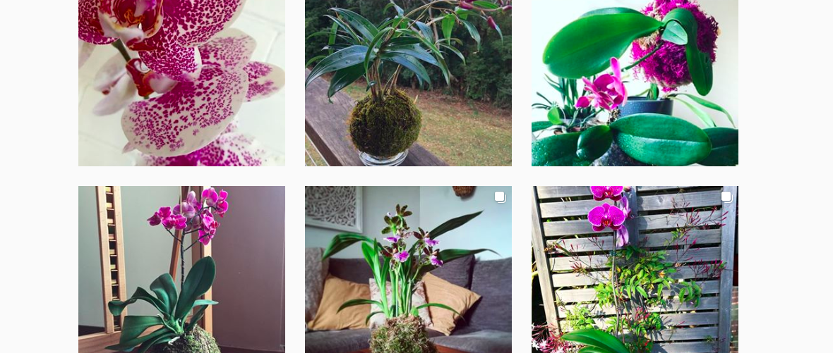 DIY: how to make a kokedama with an orchid