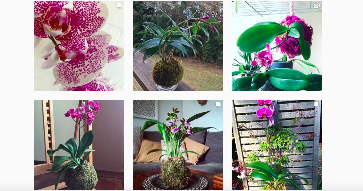 DIY: een kokedama met een orchidee maken