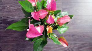 leuke cadeautjes voor plantenmama's
