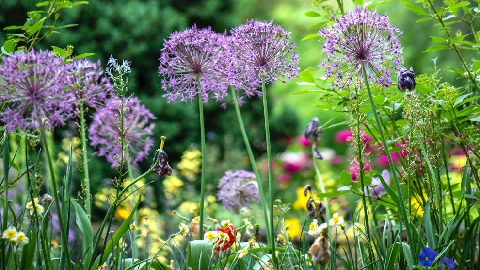 Zo maak je je tuin klaar voor de lente: 6 stappen