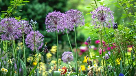 6 tips to get your garden ready for spring
