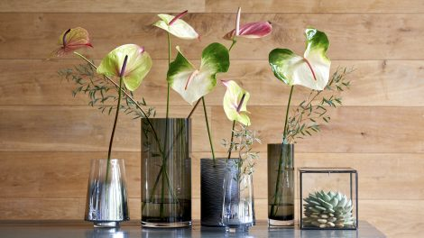 bring spring into your home with anthurium flowers and plants
