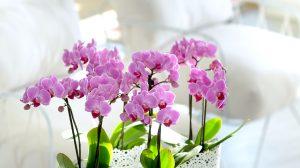 Zo geef je je orchidee een nieuw leven in de lente