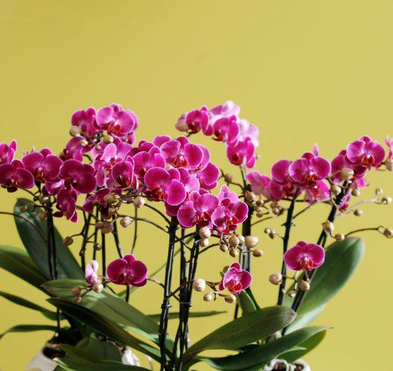 Een Paastafel vol bloemen: 3 tips