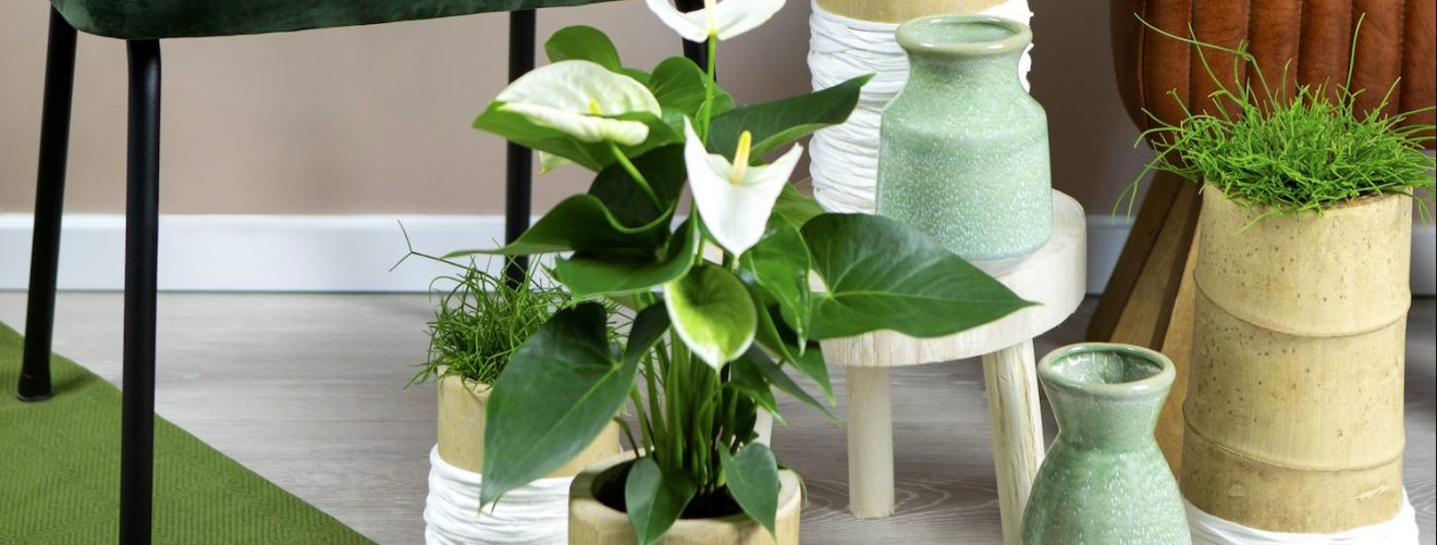 De leukste cadeaus voor moeders die van planten houden