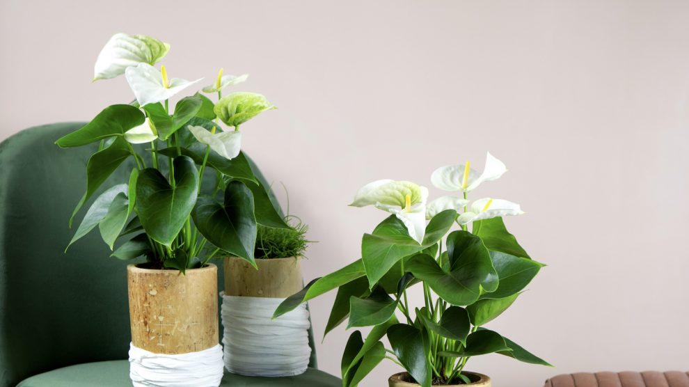 The best gifts for plant moms