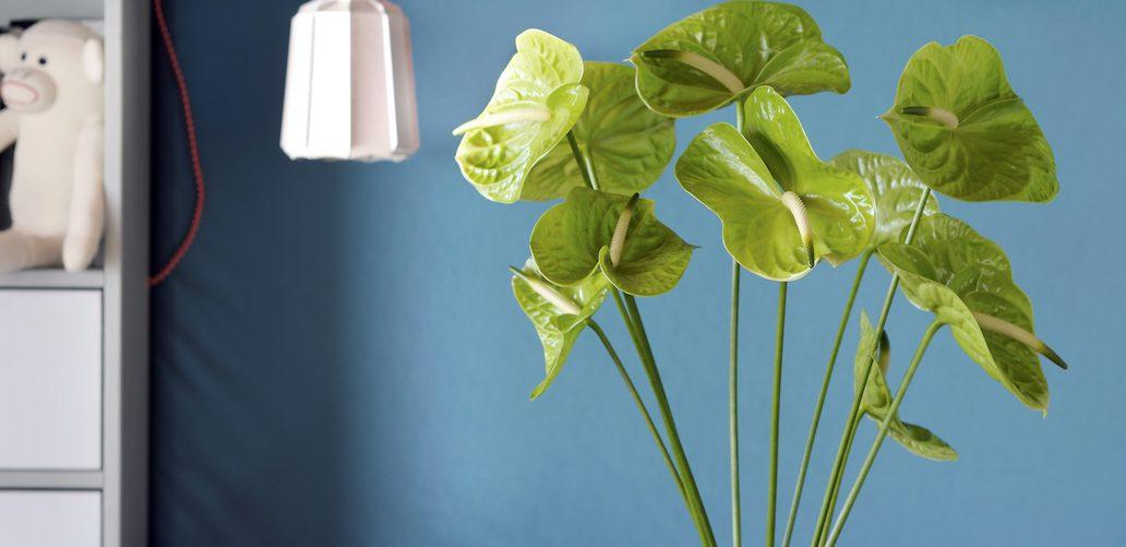 4 styling ideeën met anthurium potplanten & snijbloemen