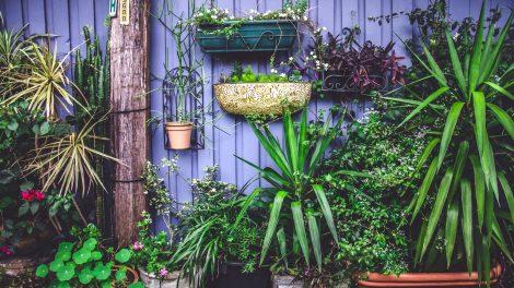 #tuingoals: de mooiste tuinen van Instagram