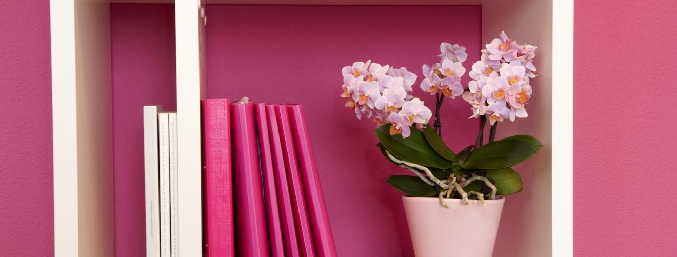 4 Ideas for interior decorating with orchids
