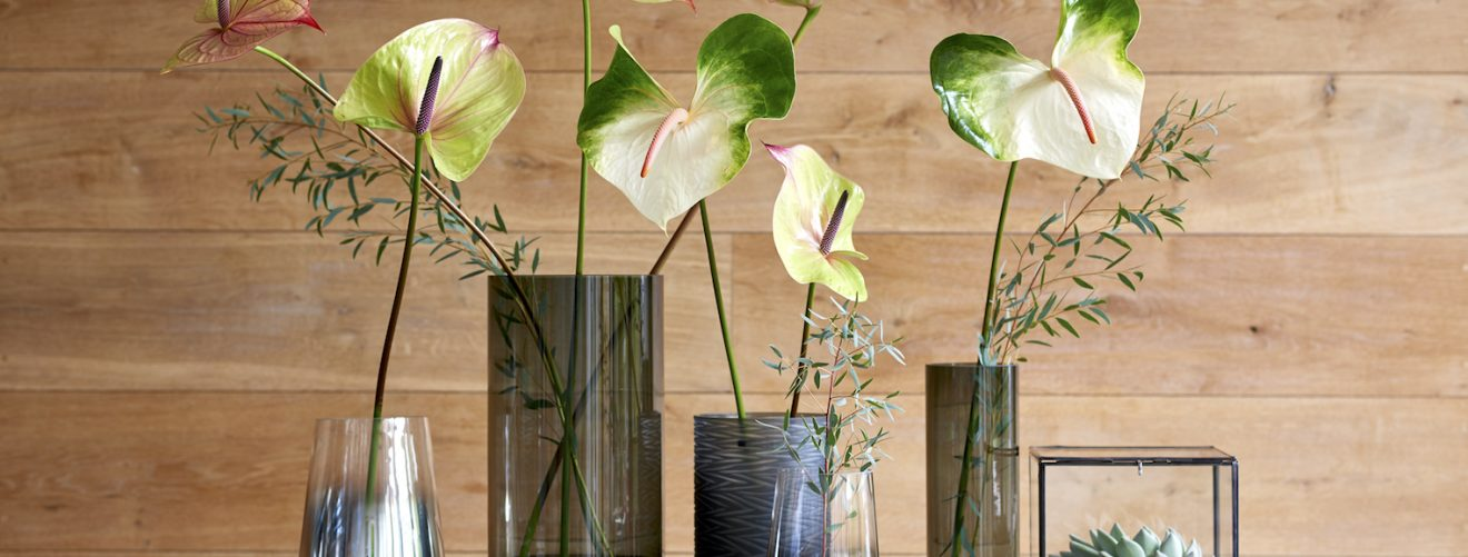 How to care for anthurium cut flowers