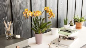 3 tips to create a home office you'll love to work in