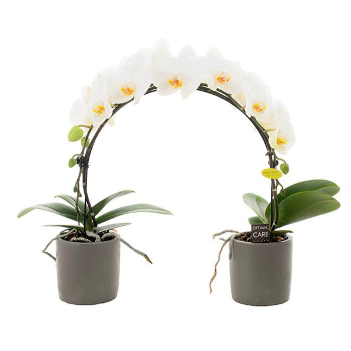 De verschillende vormen orchideeën op een rij