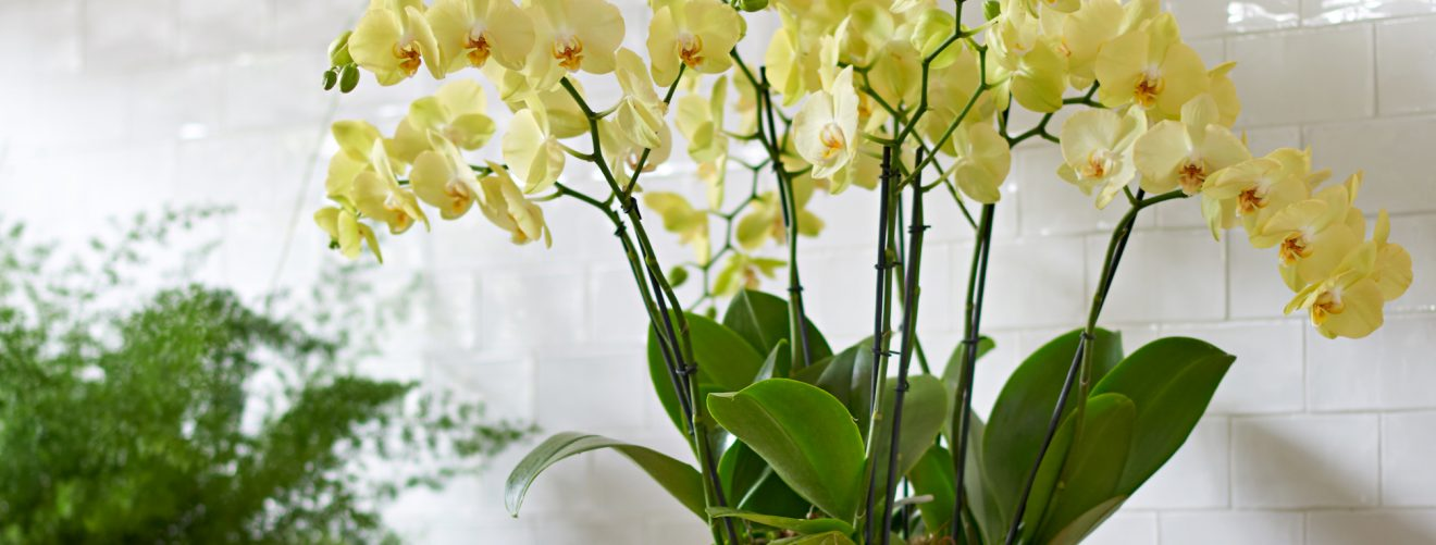 Met deze exotische planten in huis houd je het vakantiegevoel langer vast