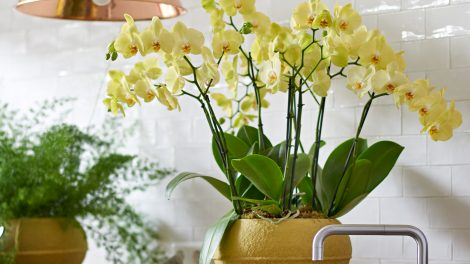 Exotic indoor plants that bring the summer feeling into your home