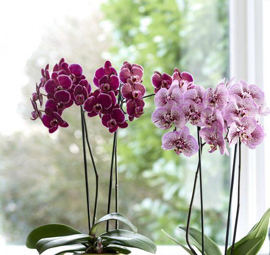 Op deze manier kun je kamerplanten buiten neerzetten