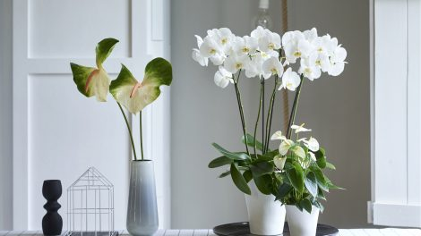 4 tips om gemakkelijk meer groen in huis te halen