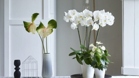 4 tips to easily get more green at home