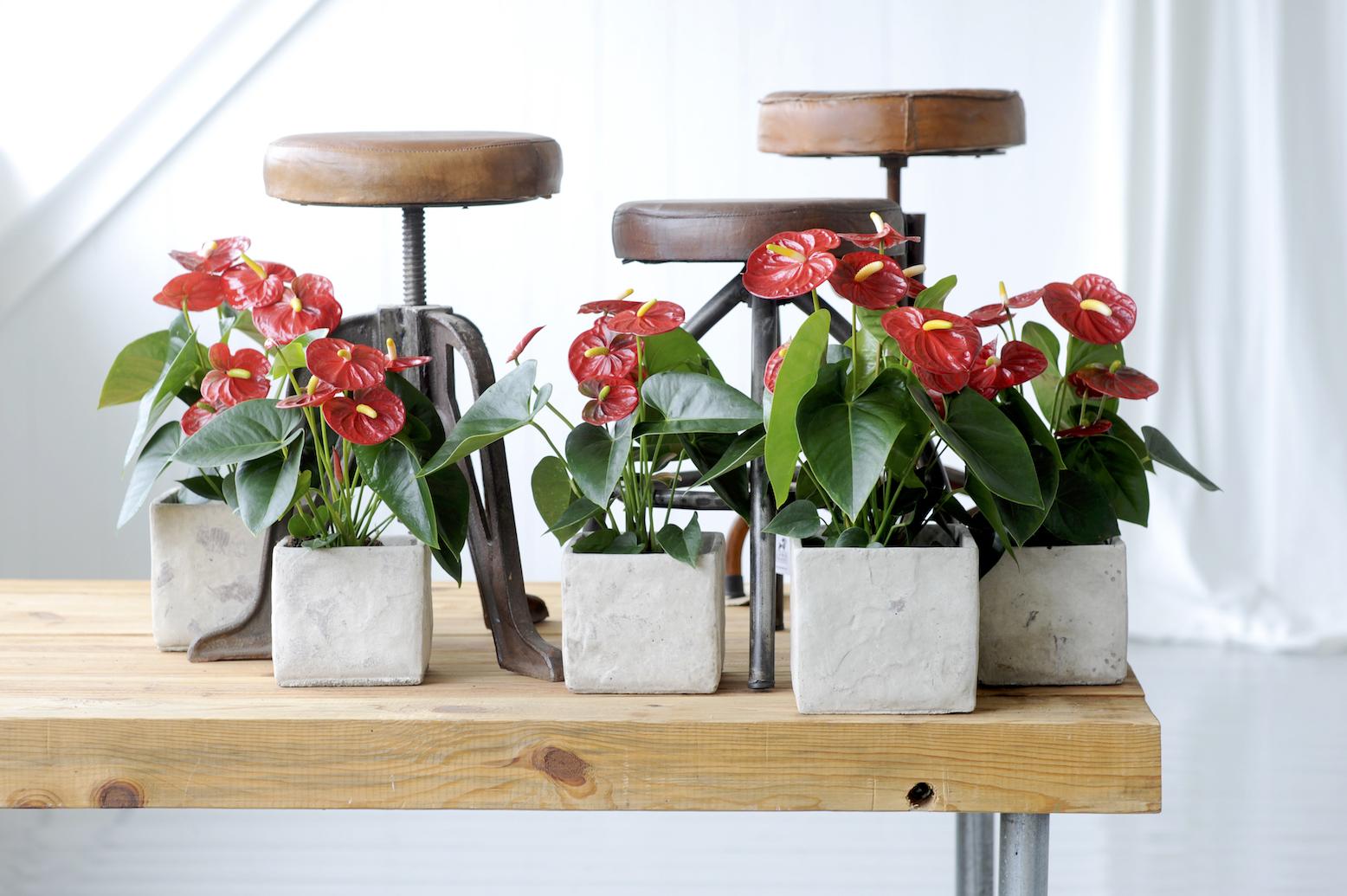 Non-toxic living: 3 tips om in huis toe te passen
